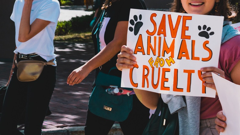 "The word "" Save animals from cruelty "" drawn on a carton banner in woman's hand. Human holds a cardboard with an inscription. Animal Right March. Protest. Rally. Marching - Image"