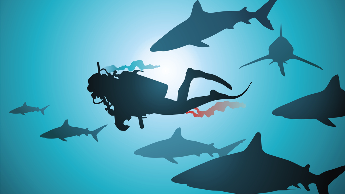 The wounded diver floats among malicious and hungry sharks - Vector